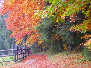 trasy rowerowe jesienią